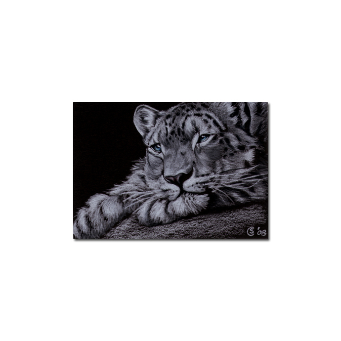 SNOW LEOPARD 3 big cat animal feline pencil painting Sandrine Curtiss Art