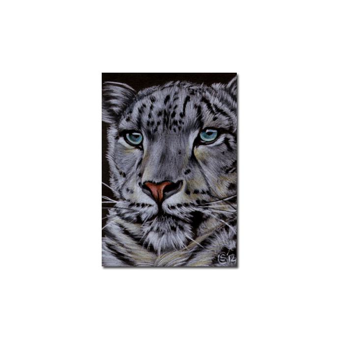 SNOW LEOPARD 13 big cat animal feline pencil painting Sandrine Curtiss Art