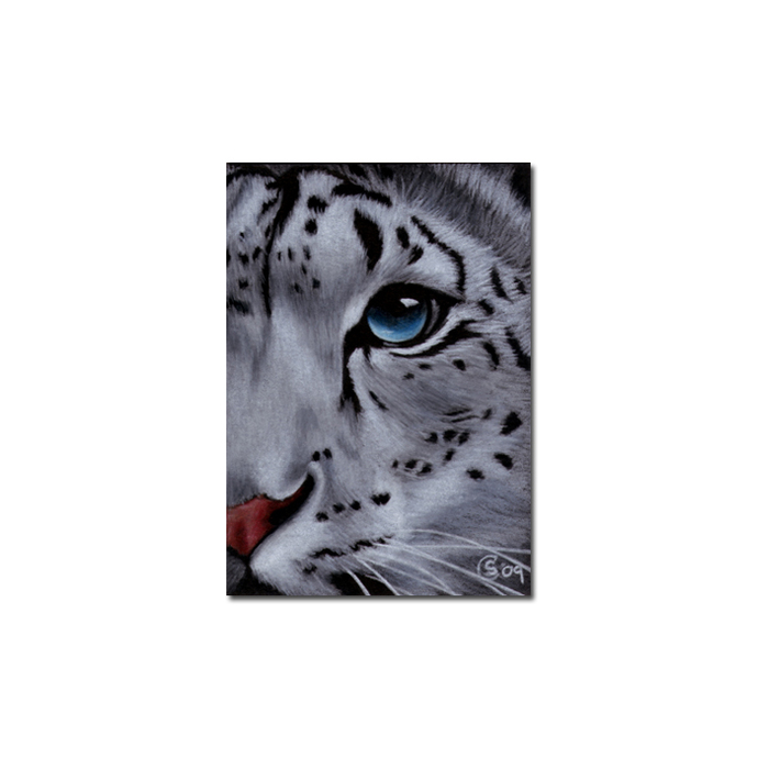 SNOW LEOPARD 6 big cat animal feline pencil painting Sandrine Curtiss Art
