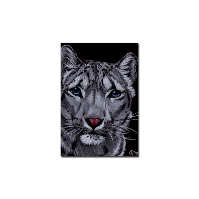 SNOW LEOPARD 9 portrait big cat animal feline pencil painting Sandrine Curtiss