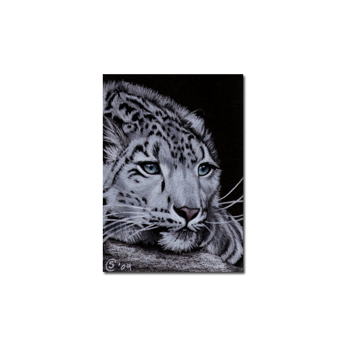 SNOW LEOPARD 5 portrait big cat animal feline pencil painting Sandrine Curtiss