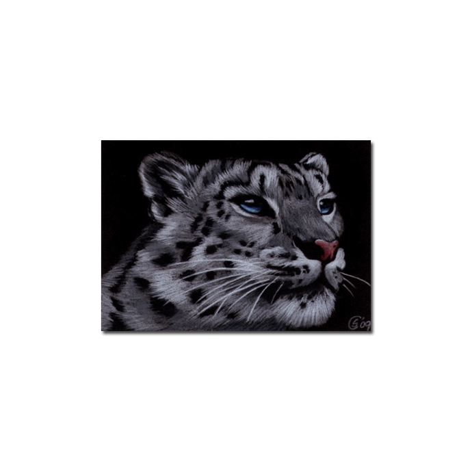 SNOW LEOPARD 8 portrait big cat animal feline pencil painting Sandrine Curtiss