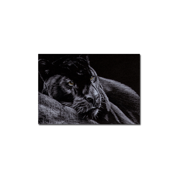 BLACK PANTHER 7 big cat animal feline pencil painting Sandrine Curtiss Art