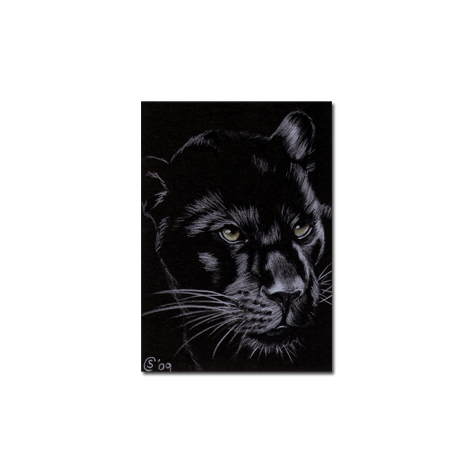 BLACK PANTHER 9 big cat animal feline pencil painting Sandrine Curtiss Art