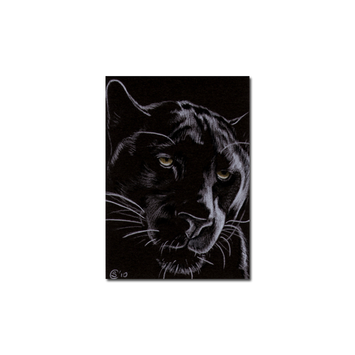 BLACK PANTHER 12 big cat animal feline pencil painting Sandrine Curtiss Art