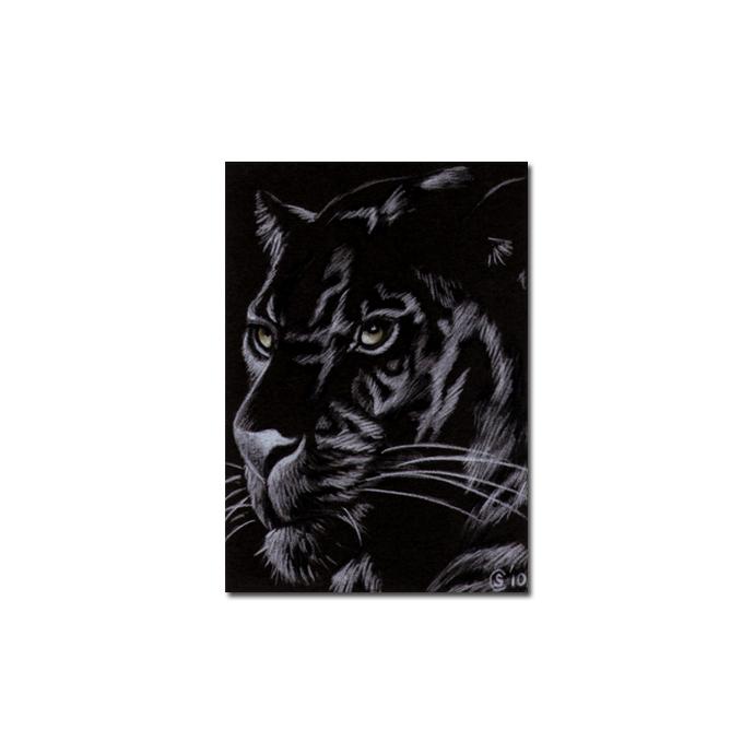 BLACK PANTHER 11 big cat animal feline pencil painting Sandrine Curtiss Art