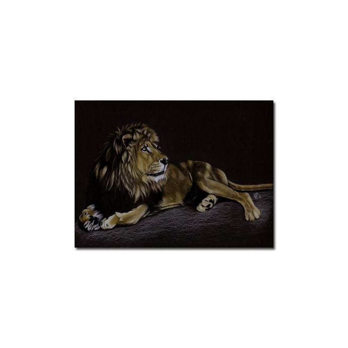 LION 20 portrait big cat feline pencil painting Sandrine Curtiss Art Limited