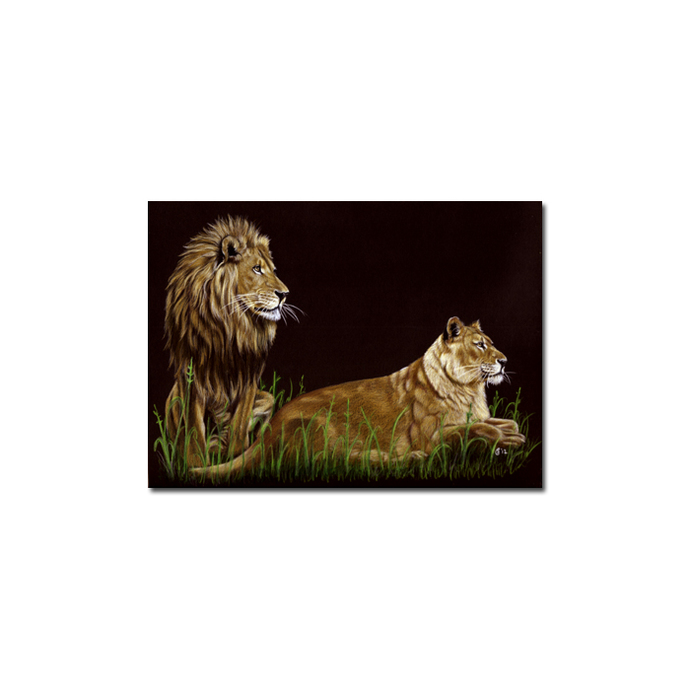LIONS 2 portrait big cat feline pencil painting Sandrine Curtiss Art Limited