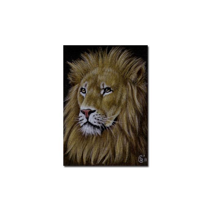 LION 18 portrait big cat feline pencil painting Sandrine Curtiss Art Limited