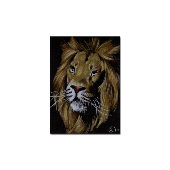 LION 14 portrait big cat feline pencil painting Sandrine Curtiss Art Limited