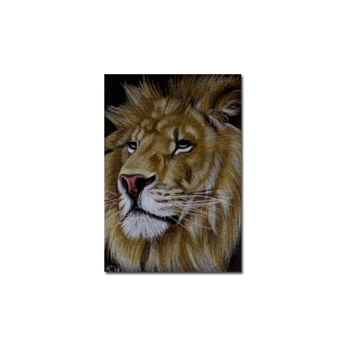 LION 13 portrait big cat feline pencil painting Sandrine Curtiss Art Limited