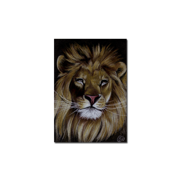 LION 12 portrait big cat feline pencil painting Sandrine Curtiss Art Limited