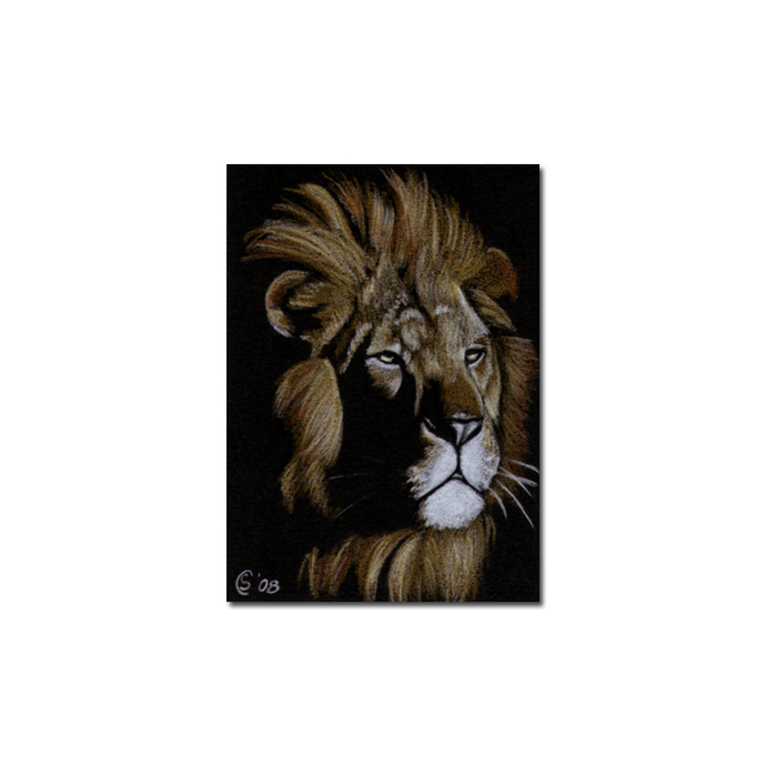 LION 6 portrait big cat feline pencil painting Sandrine Curtiss Art Limited
