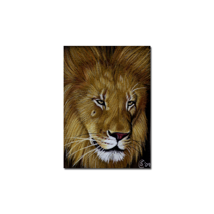 LION 10 portrait big cat feline pencil painting Sandrine Curtiss Art Limited