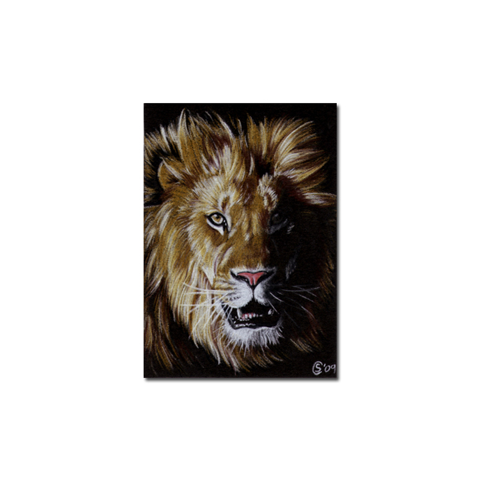 LION 9 big cat feline pencil painting Sandrine Curtiss Art Limited Edition Print