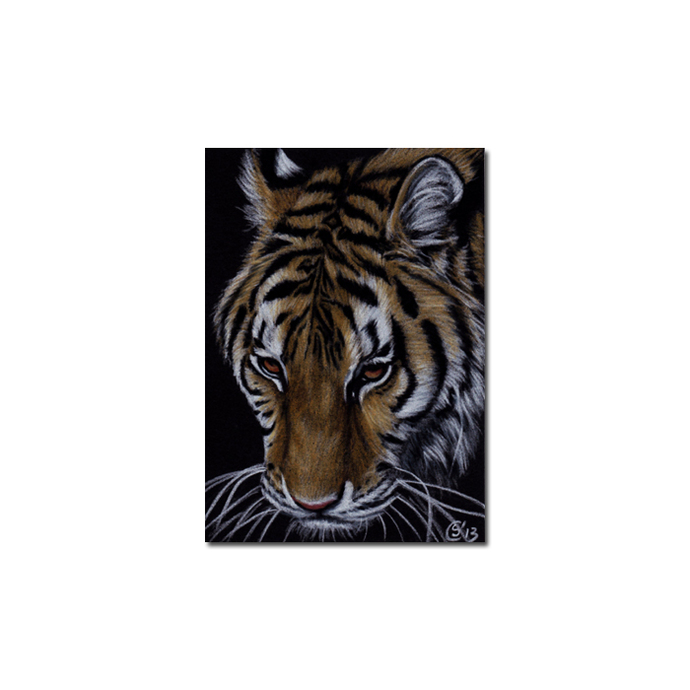 TIGER 44 portrait big cat feline pencil painting Sandrine Curtiss Art Limited