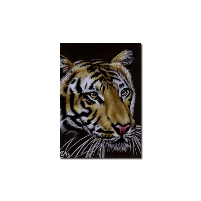 TIGER 43 portrait big cat feline pencil painting Sandrine Curtiss Art Limited