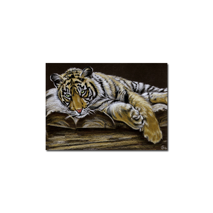 TIGER 42 portrait big cat feline pencil painting Sandrine Curtiss Art Limited