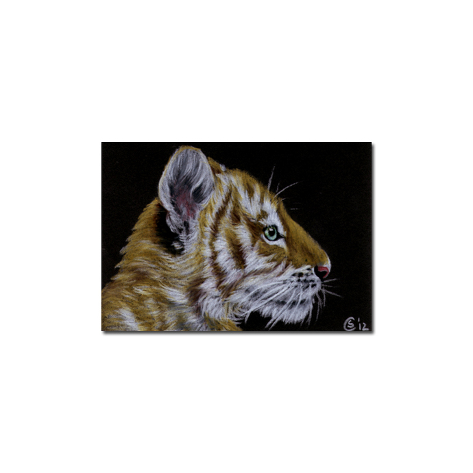 TIGER 41 portrait big cat feline pencil painting Sandrine Curtiss Art Limited