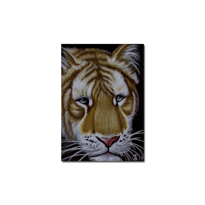 TIGER 37 portrait big cat feline pencil painting Sandrine Curtiss Art Limited