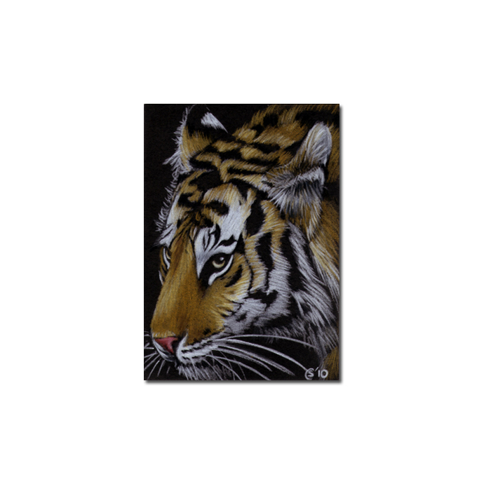 TIGER 34 portrait big cat feline pencil painting Sandrine Curtiss Art Limited