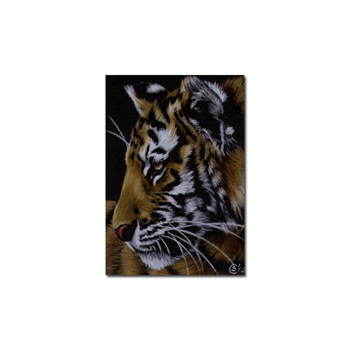 TIGER 32 portrait big cat feline pencil painting Sandrine Curtiss Art Limited