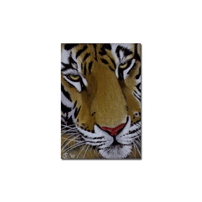 TIGER 29 portrait big cat feline pencil painting Sandrine Curtiss Art Limited