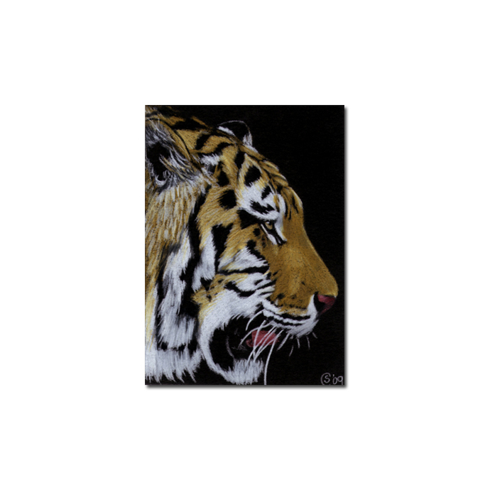 TIGER 25 portrait big cat feline pencil painting Sandrine Curtiss Art Limited