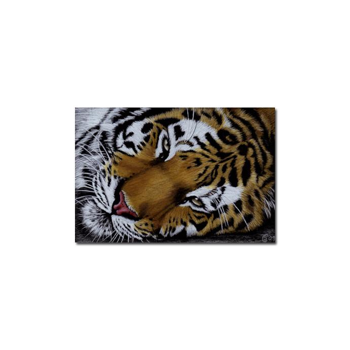 TIGER 23 portrait big cat feline pencil painting Sandrine Curtiss Art Limited