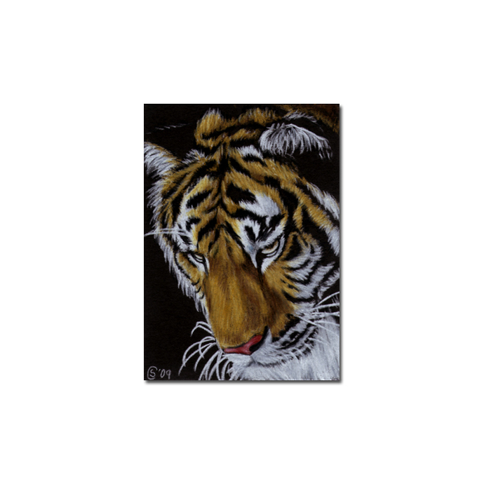 TIGER 22 portrait big cat feline pencil painting Sandrine Curtiss Art Limited