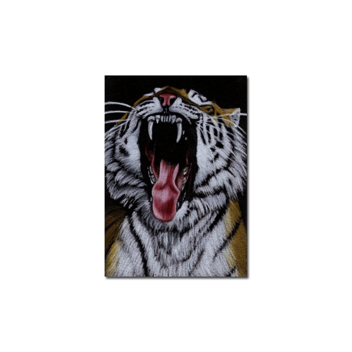 TIGER 20 portrait big cat feline pencil painting Sandrine Curtiss Art Limited