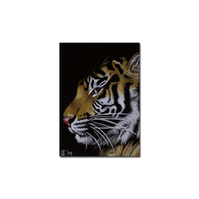 TIGER 19 portrait big cat feline pencil painting Sandrine Curtiss Art Limited