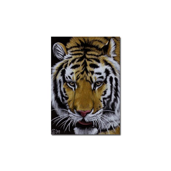 TIGER 18 portrait big cat feline pencil painting Sandrine Curtiss Art Limited