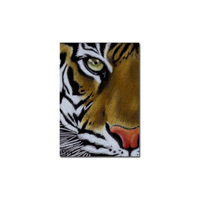 TIGER 16 portrait big cat feline pencil painting Sandrine Curtiss Art Limited