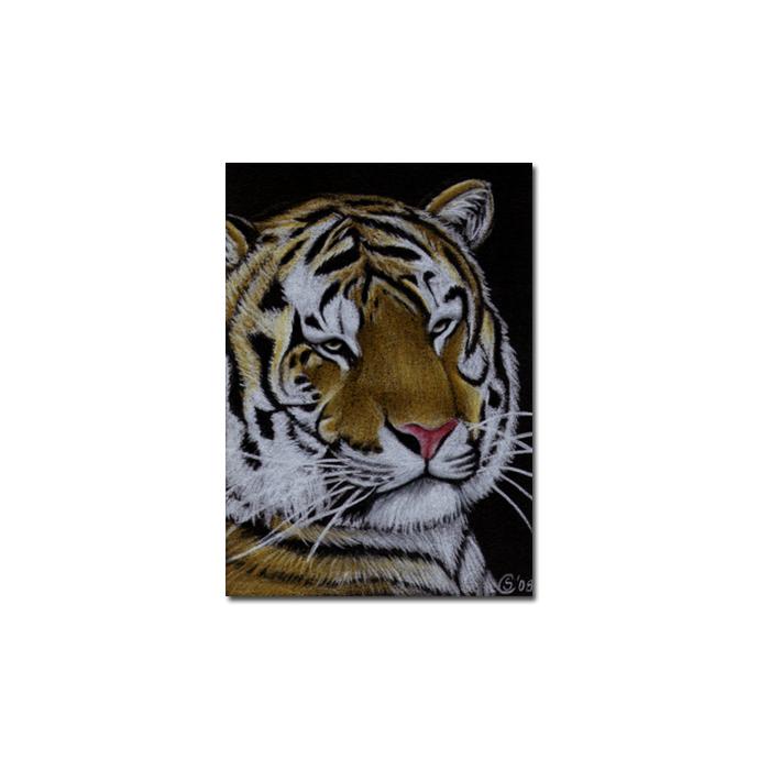 TIGER 14 portrait big cat feline pencil painting Sandrine Curtiss Art Limited