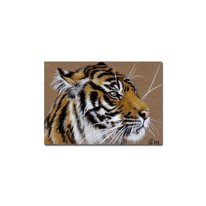 TIGER 8 portrait big cat feline pencil painting Sandrine Curtiss Art Limited