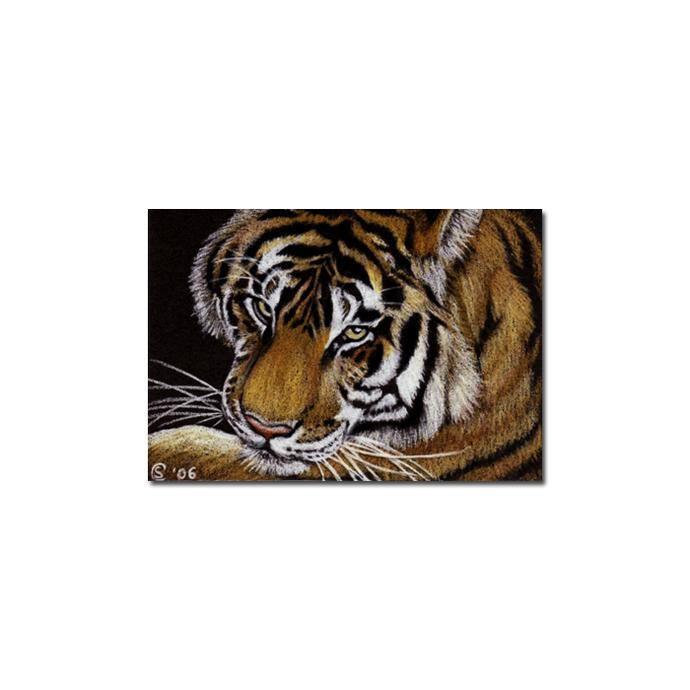 TIGER portrait big cat feline pencil painting Sandrine Curtiss Art Limited
