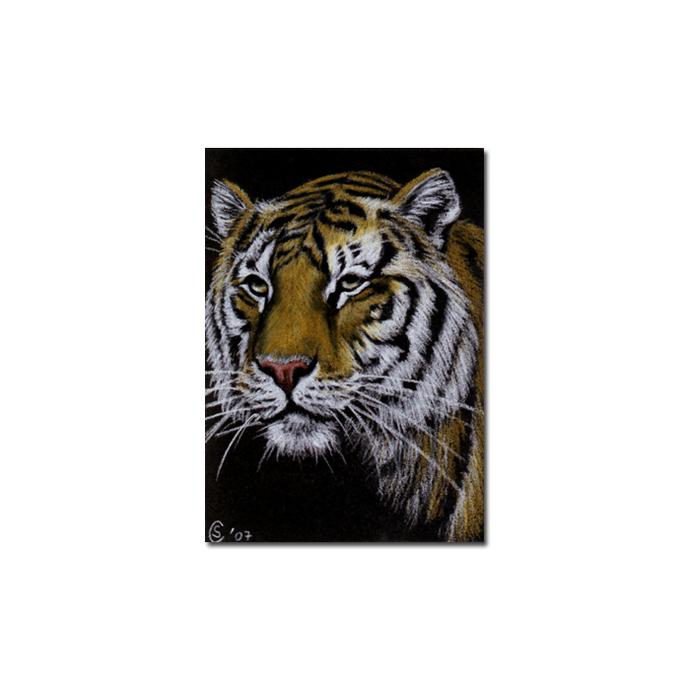 TIGER 4 portrait big cat feline pencil painting Sandrine Curtiss Art Limited