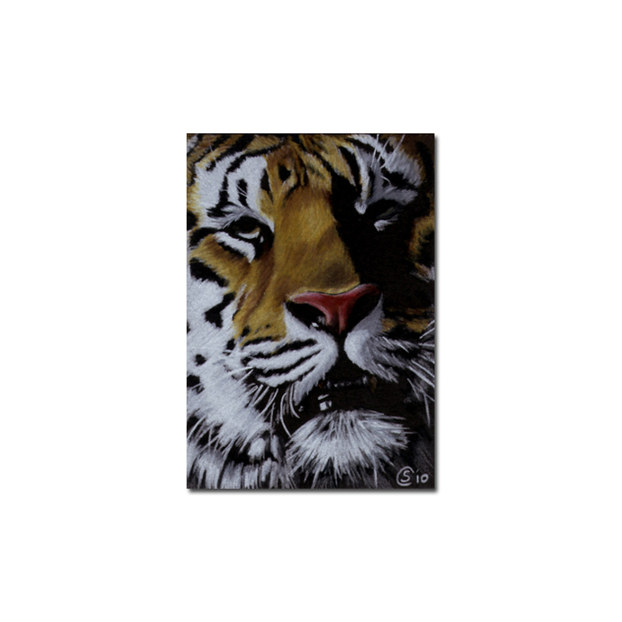 TIGER 28 big cat animal feline pencil painting Sandrine Curtiss Art Limited