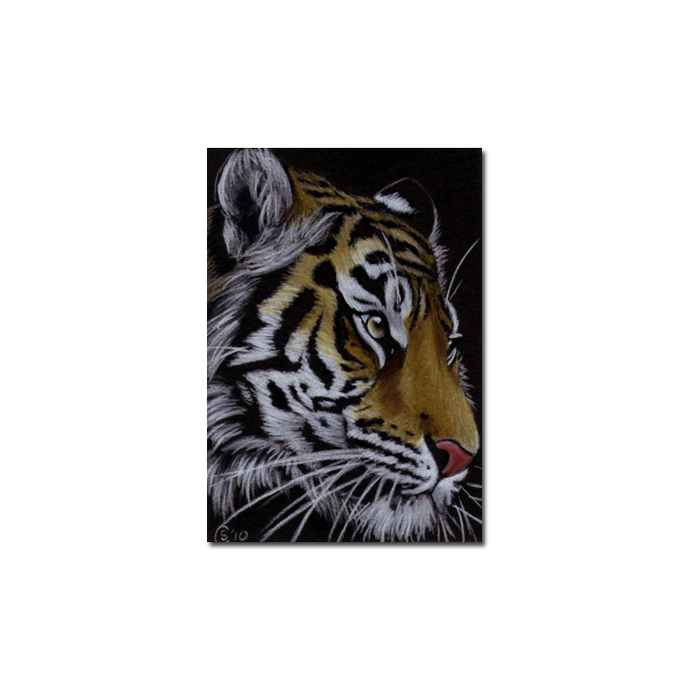 TIGER 35 big cat animal feline pencil painting Sandrine Curtiss Art Limited