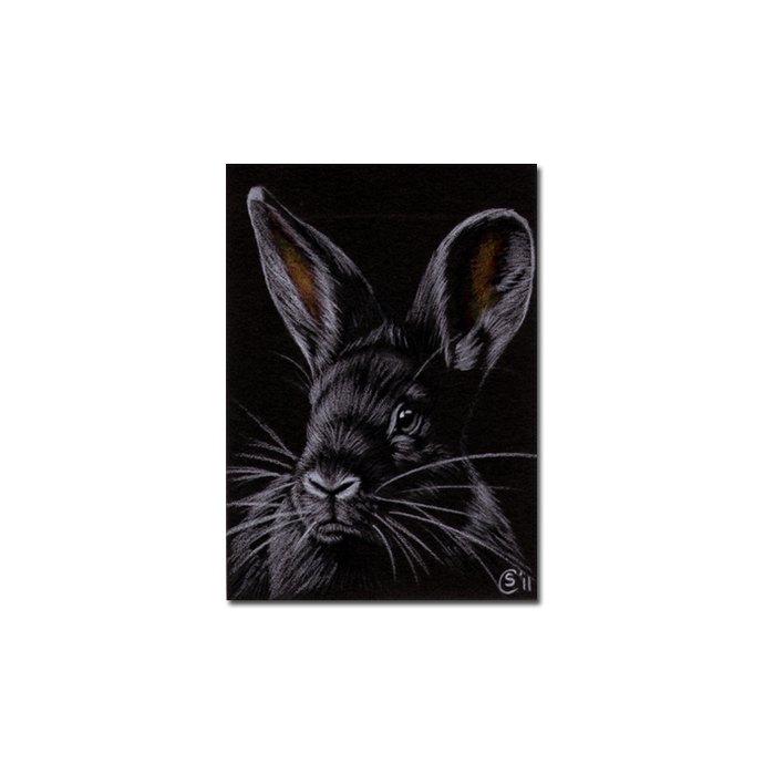 BUNNY 85 rabbit black dutch Easter pet pencil painting Sandrine Curtiss Art