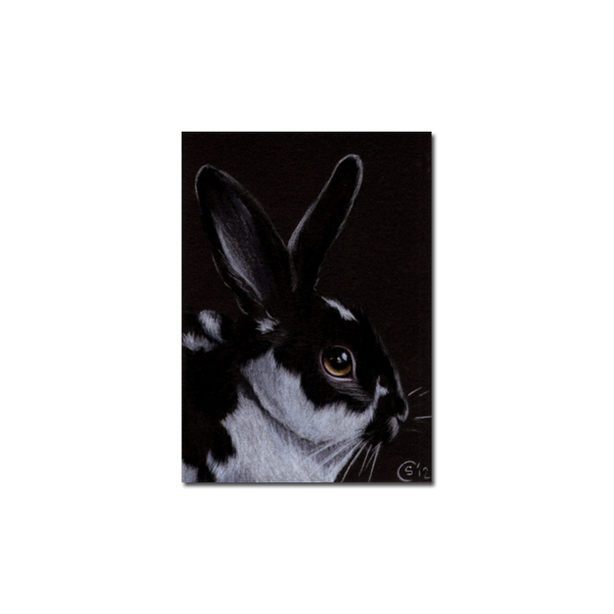 BUNNY 114 rabbit black dutch Easter pet pencil painting Sandrine Curtiss Art