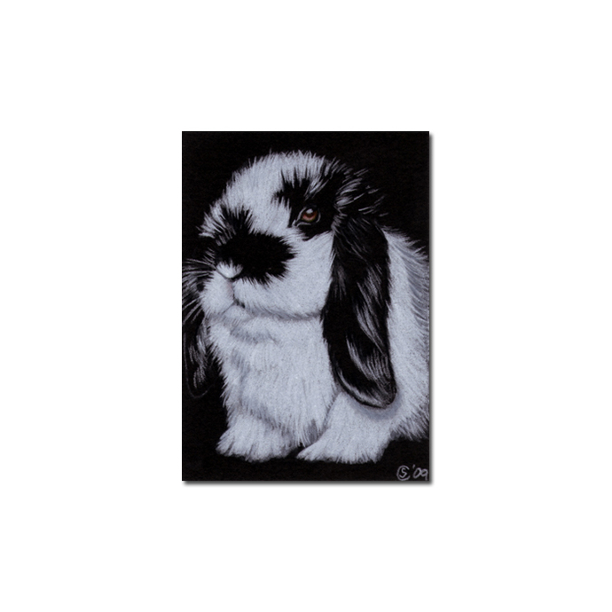 BUNNY 67 rabbit black dutch Easter pet pencil painting Sandrine Curtiss Art