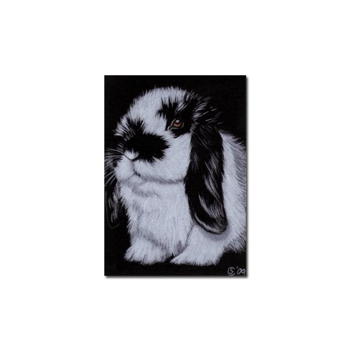 BUNNY 67 rabbit black dutch Easter pet pencil painting Sandrine Curtiss Art