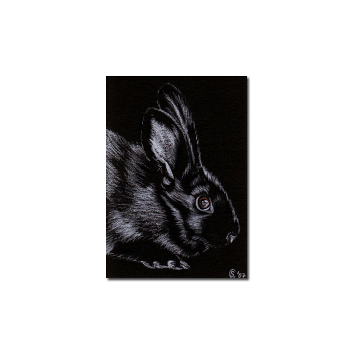 BUNNY 6 rabbit black dutch Easter pet pencil painting Sandrine Curtiss Art