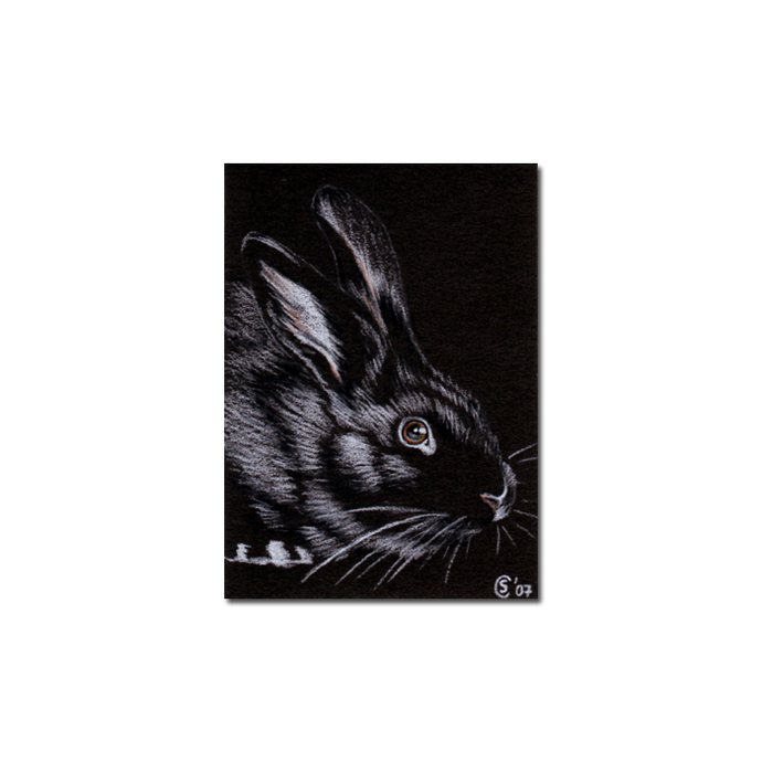 BUNNY 14 rabbit black dutch Easter pet pencil painting Sandrine Curtiss Art