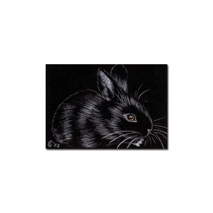 BUNNY 21 rabbit black dutch Easter pet pencil painting Sandrine Curtiss Art