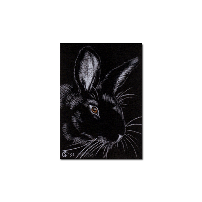 BUNNY 20 rabbit black dutch Easter pet pencil painting Sandrine Curtiss Art