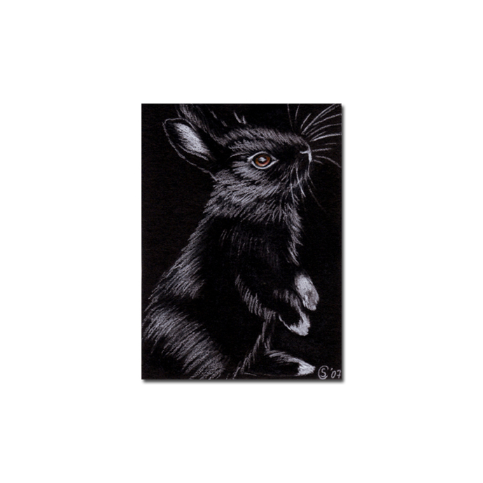 BUNNY 22 rabbit black dutch Easter pet pencil painting Sandrine Curtiss Art