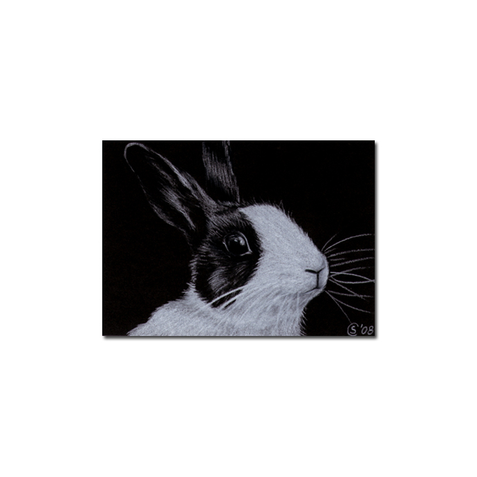BUNNY 44 rabbit black dutch Easter pet pencil painting Sandrine Curtiss Art